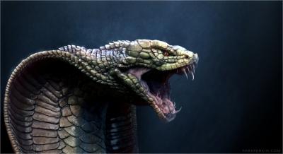Cobra-Dragon.jpg